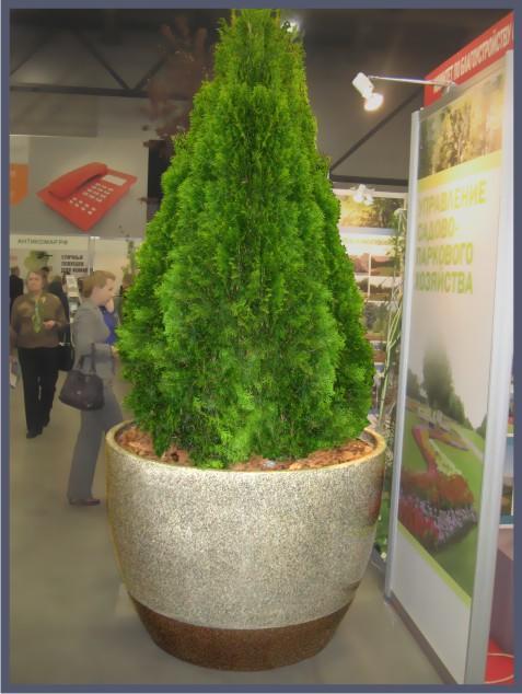 Деревьев и крупногабаритных растений